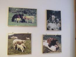 Vera Gjersøe - 4 dyrefoto + foto av 3 hestar