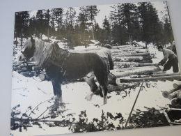 1 stk stort svart/kvit foto