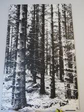 «Skogsvekst» svart/kvit foto