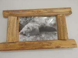 1 stk foto av bjørn med treramme